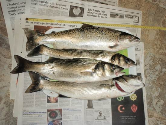 Sea trout and bass